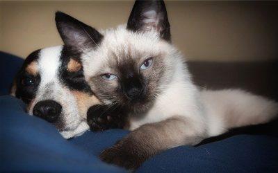 Enquête sur la téléconsultation vétérinaire
